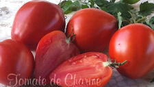 10 graines de tomate rare VLADIMIR PUTIN (coeur de boeuf) heirloom tomato m.bio