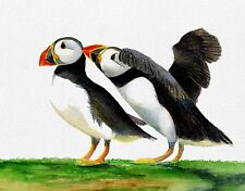 Puffin Birds Watercolour Painting A4 Signed Limited Edition Print Wildlife Gift