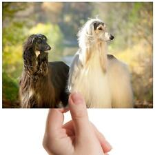 """Afghan Hounds Canine Dog Pets Small Photograph 6""""x4"""" Art Print Photo Gift #16056"""