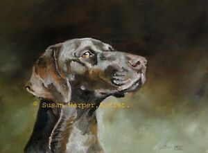 SALE German Shorthaired Pointer Signed Dog Print by Susan Harper Unmounted