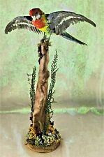 W79 Taxidermy Eastern Rosella Parakeet Bird Collectble Display Stand specimen