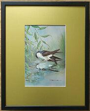 Basil Ede, 20''x16'' frame, Framed Bird wall art, House Martin print