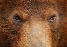 A1 | Brown Bear Wild Animal Poster Art Print 60 x 90cm 180gsm - Bear Gift #14660