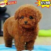 Realistic Teddy Dog Simulation Toy Dog Puppy Lifelike Stuffed Toy Christmas Gift