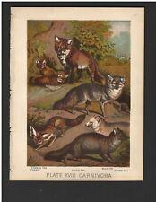 Antique Color Plates (1880) – Common Fox, Tenrec, Arctic Fox, Blue Fox