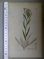 English Botany, Smith, Sowerby, handcoloured copperplate, 548, 3.Edition,1850.