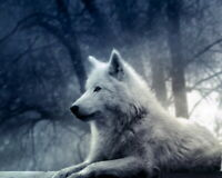 Art Print Animals Snow Wolf Oil painting HD Giclee Printed on Canvas P194