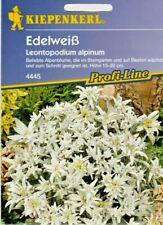 Edelweiß Mehrjährig Alpenblume Samen Blumen für ca. 30 Pflanzen  Steingarten