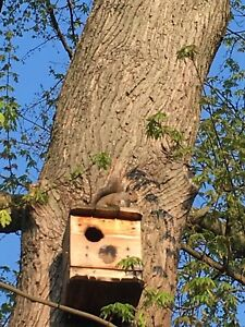 1=House.Squirrel.GRAY.SQUIRREL NESTING BOX .squirrel house. BUILT by U.S.A. VETS