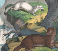1886 Belle lithographie originale fouine hermine belette animaux gravure