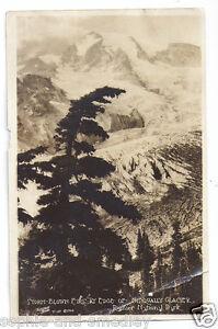 1927 RPPC - Storm-Blown Firs at Edge of Nisqually Glacier, Rainier Nat'l Park
