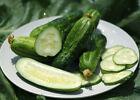 30 Boston Pickling Cucumber Seeds