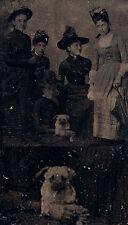 PORTRAIT OF FIVE WOMEN IN BEAUTIFUL HATS W/ PUPPY IN OUTDOOR STUDIO SCENE