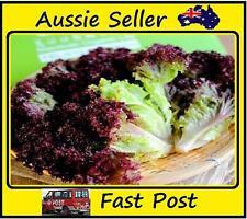 100 Pcs Purple Leaf Lettuce Seeds Vegetable For Nutrition and Health, All Season