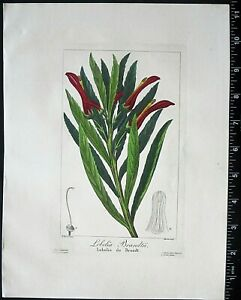 Bessa,P.Flore des Jardiniers,Lobelia Brandtii,hand colored Engraving,c.1836