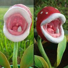 100 Pokemon Bonsai Pflanze Samen Seltene Fleischfressende Pflanze Samen NEU