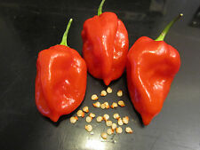 35+ RED SAVINA HABANERO CHILE PEPPER SEEDS Growing Instructions Included