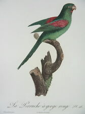 ORANGE-CHINNED PARAKEET PARROT BARRABAND LEVAILLANT COL. ENGRAVING 1801 I26
