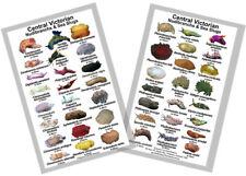 Nudibranch & Sea Slug Identification Card – Victoria