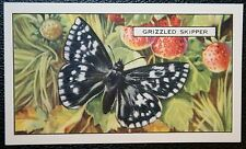 Grizzled Skipper   Butterfly   Vintage Illustrated Colour Card   VGC