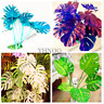 100pcs Monstera Bonsai Garden Seeds Beautiful Turtle Leaves Tree Palm,mix color