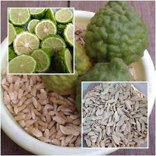 Kaffir lime 50 Seeds, Leech lime, Citrus hystrix, Herbs Seeds From Thailand