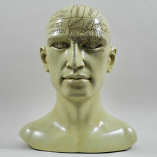 Large Phrenology Head Human Skull Design Statue Sculpture Decoration Ornament