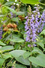 A3 Photo Print: Flowers at Kew Gardens, London