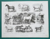 FARMING Animals Horses Arabian Norman Dogs Pug Greyhound - 1870 Antique Print