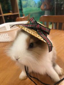 Rabbit Guinea Pig Ferret Costumes Clothes Hat Accessories Toys