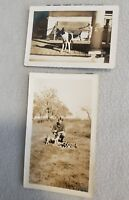 Set of 2 Vintage 50's DOG Photos Hound Boston Terrier Porch Black White