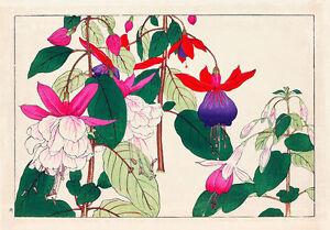 Fuchsia A1 by Tanagami Konan High Quality Canvas Art Print