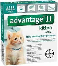 Advantage II Kitten