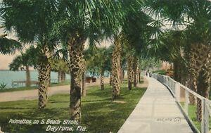 DAYTONA FL – Palmettos on South Beach Street - 1909