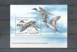 (875444) Birds, Ducks, Yemen