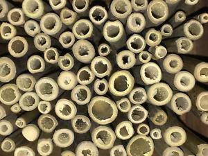 50 Bambusröhrchen 10 cm 2 - 8mm für Insektenhotel Nisthülsen mit Knoten Röhren