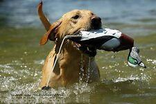 Avery Greenhead Gear Dog EZ Bird ATB Wigeon Widgeon Training Bumper Dummy