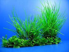 Aquarium Plastic Plants  25.6cm Ornament Decor WATER Tropical Fish Tank