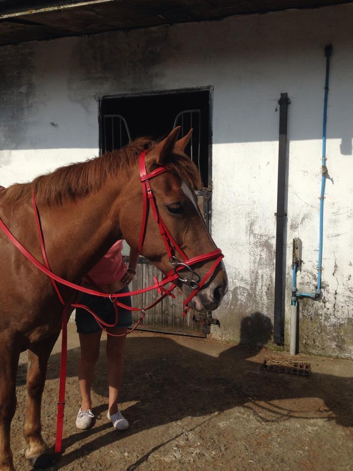 equestriantackuk