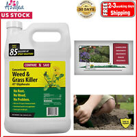 Compare-N-Save Concentrate Grass and Weed Killer, 41-Percent Glyphosate
