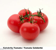 Tomato RED 15 Celebrity Heirloom Tomate EXCEED TASTE GREAT SIZE QUANTITY LIMITED