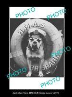 OLD 8x6 HISTORIC PHOTO OF AUSTRALIAN NAVY HMAS BRISBANE BULLDOG MASCOT c1916