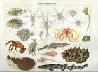 Entwicklungsgeschichte - 3 Alte Drucke 1903 Antique Prints Biologie