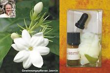 JASMIN Jasminum grandiflorum sambac Indien - 100% naturreines ätherisches Öl 1ml