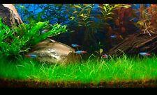 IMPIANTO d'acqua erba semi-ARREDAMENTO CASA GIARDINO Per FishTank/Pond 50 Semi