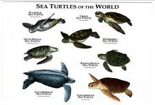 Art Postcard 7 Diff Sea Turtles Green Hawksbill Leatherback Loggerhead Flatback