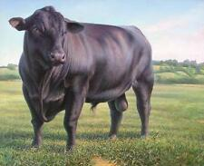 """CATTLE -BLACK ANGUS BULL  on One 16 Inch Fabric Panel to Sew. Pic is 8"""" x 11""""."""