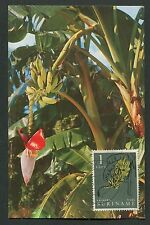 SURINAME MK 1961 FLORA FRÜCHTE BANANEN FRUITS FRUIT MAXIMUM CARD MC CM d7791