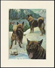 ELKHOUND DOG GROUP IN SNOW SCENE GREAT DOG PRINT MOUNTED READY TO FRAME