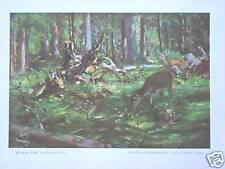 Viejos gráficos de caza #auf soleado böße #schramm #rehwild ciervos